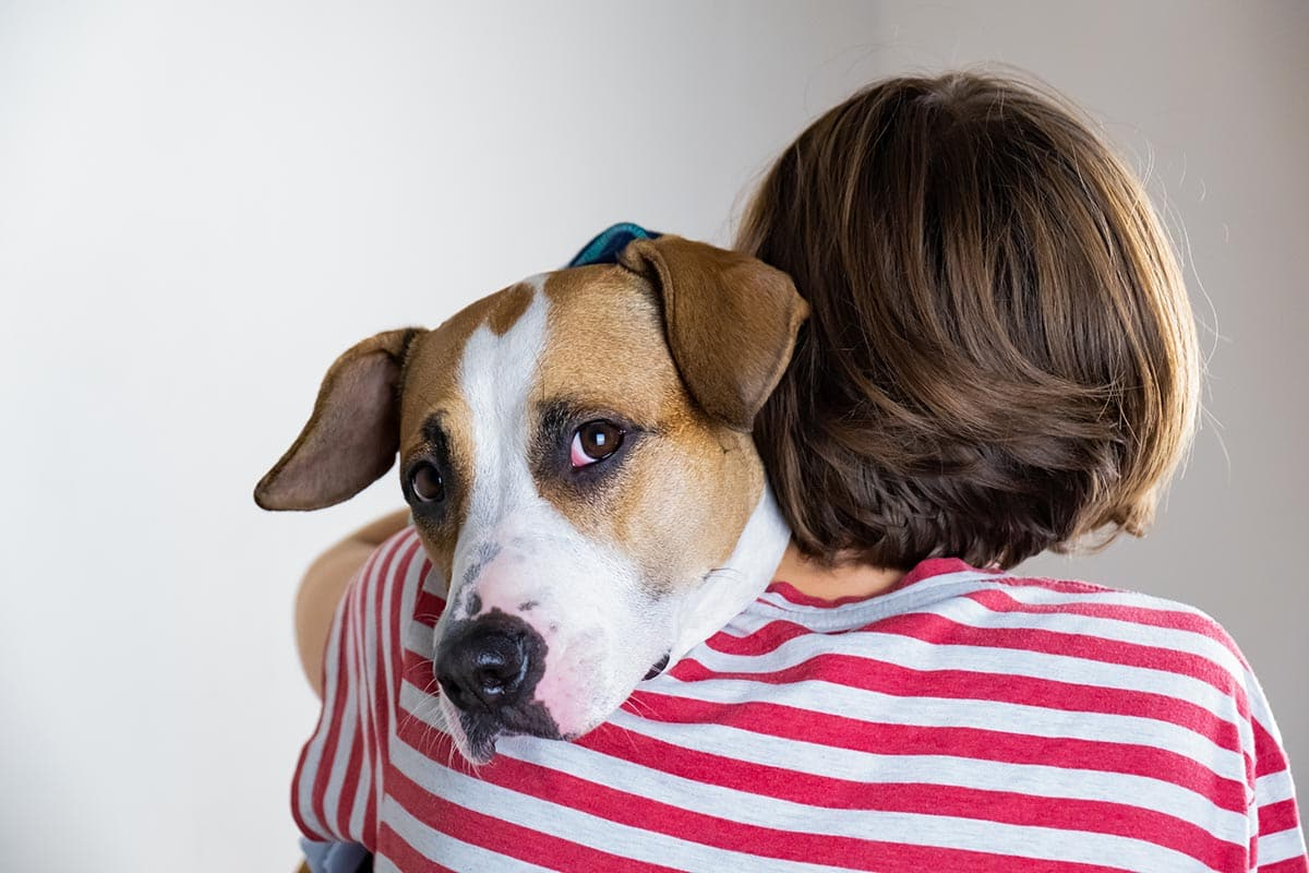dogs are great therapy animals like this upper helping his owner with addiciton treatment